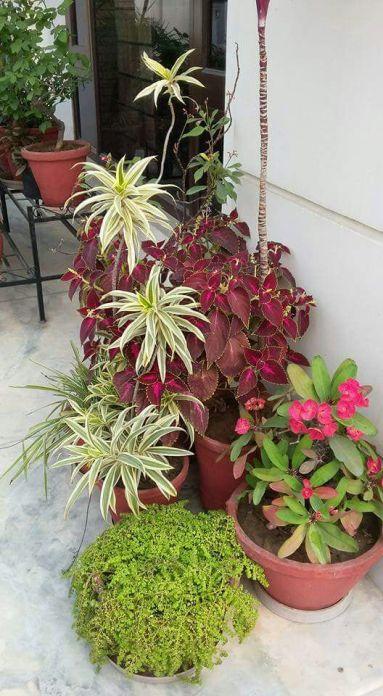 Plants (3)